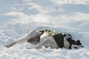laying in the snow by Moonstarphotos