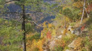 Canyon in Fall 9 by ToshirotheKnightWolf