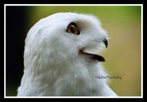 Snow Owl by declaudi