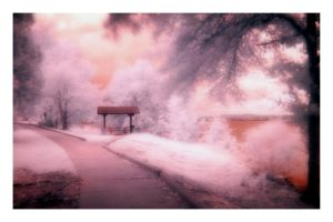 Sidewalk in the Park: Infrared by GeneAut
