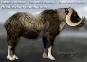 Bootherium bombifrons by Dantheman9758