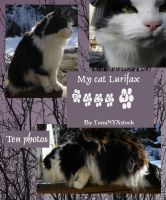 My cat Lurifax, pack 04 by LunaNYXstock