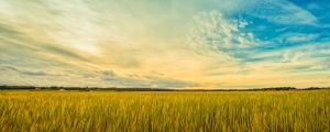 A field in Sweden by qwstarplayer