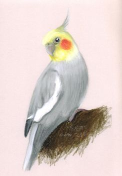 +Pastel Cockatiel+ by SiNrott
