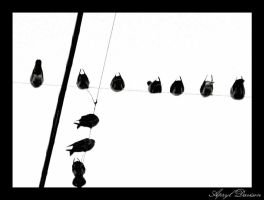 Birds on a Wire by 1Elevin1