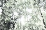 Trees + white light by AniaBuckle