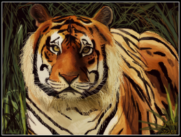 Bengal Tiger by gilly15