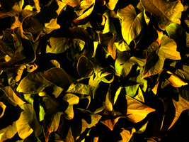 Golden Leaves by meatcar