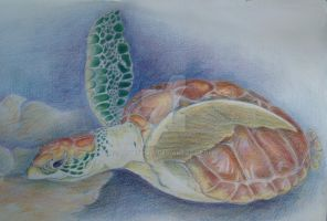 seaturtle swimming by dovespirit