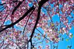 tree of flowers by FoxHunter361