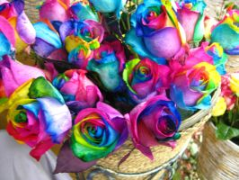 Roses in Technicolor by J-M-P-16