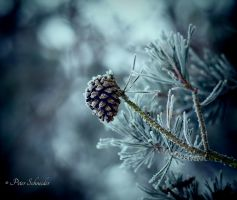 From last winter. by Phototubby