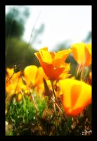 A Touch of Spring by iFix