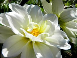 Bright White by K-A-Varley