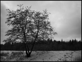 Winter tree by maryfenja
