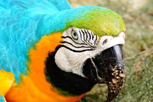 close-up of parrot by a6-k