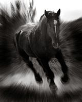 Big Black Horse by Photodeb