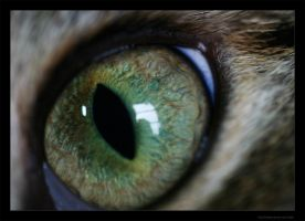 I see all by dowdall