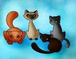Cats by AnnMY