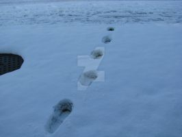 Footsteps in the snow 7304 by Maxine190889