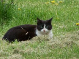 Black and white cat by black-cat16-stock