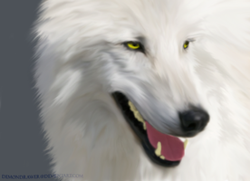 White Wolf by Demondrawer