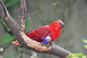 Red Parrot by angela-swift