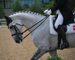 Dressage 15 by equinestudios