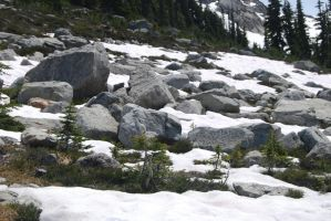 British Columbia_005 by Moose-Stock