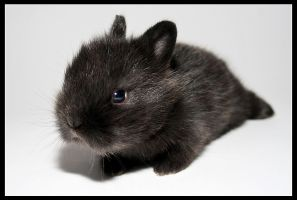 Little black rabbit by jordygraph