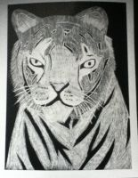 Scratched Tiger by artfreak515