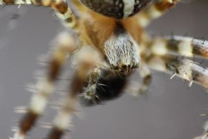 Spider Supermakro by Misterooo