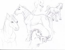 Horse sketches by Wolfieluv6