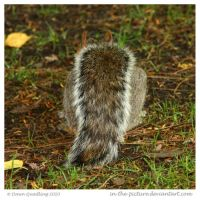 Fluffy Squirrel Tail by In-the-picture