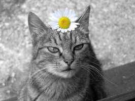 a Cat and a Daisy (partial desaturation) by Usagichan-odango