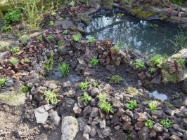Wildlife Pond, Rockery and Marginal Area- Close Up by Lost-in-the-day