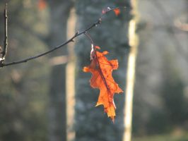 The Last Leaf by dsimple