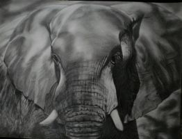 Elephant - 2 by Mariannaeva