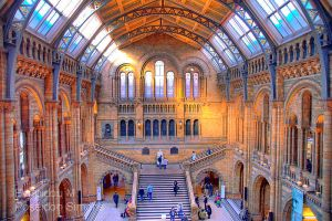 natural history museum HDR by poseidonsimons-s