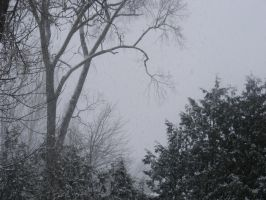 11th feb 2013 snowstorm 2 by BlueIvyViolet