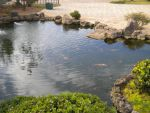 Pond with kois by SilentBob23