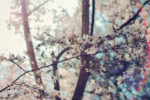 In full bloom I by OliverBPhotography