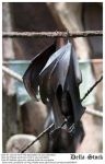Fruit Bat Wings by Della-Stock