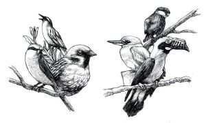 Bird Drawings by bawayan