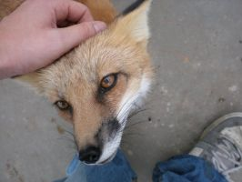 Sweetest.Fox.Ever. by nintendo1889m