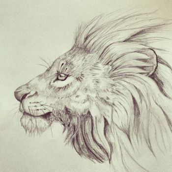 Lion sketch by tarajusher