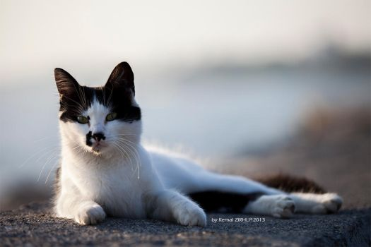 Cat by ARMRD