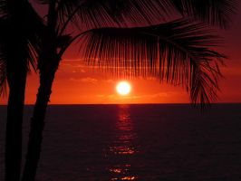 sunset through palm by theman99808