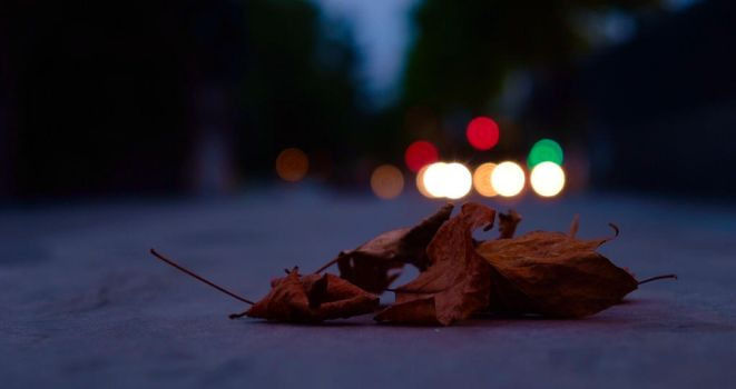 Lonely leafage by zmicq