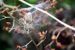 The nest of young spiders by m-gosia